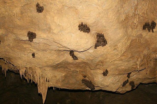 Загадочный подземный мир: Самая большая, сказочная пещера Карпат находится в буковом лесу в Закарпатье
