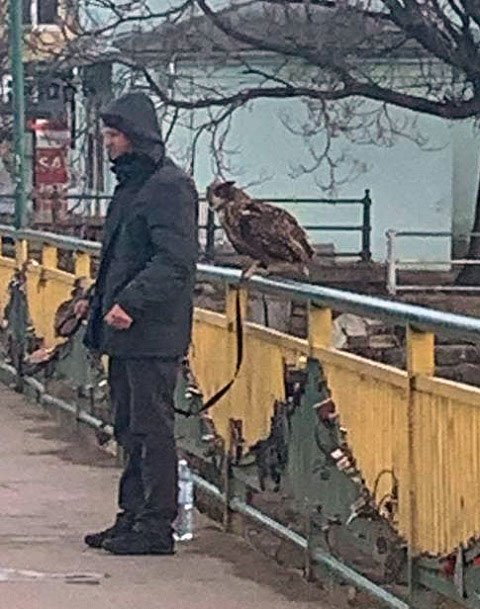 В областном центре Закарпатья продолжают издеваться над совами