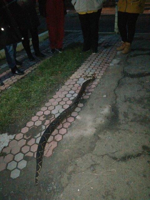 В Хусте на Закарпатье обнаружили огромную змею