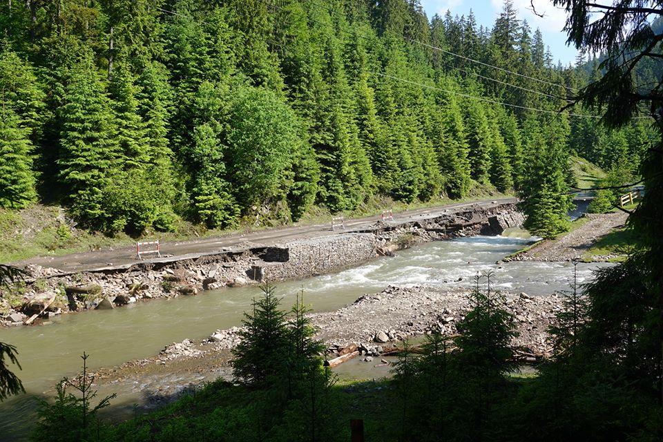 """Лісівники Закарпаття збудували """"ліву"""" дорогу для транспортування краденого лісу"""