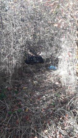 На Закарпатье в поле нашли труп человека: Новые детали