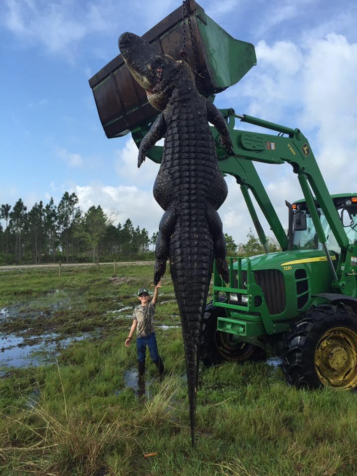 В Южной Флориде охотники застрелили 4,5-метрового аллигатора