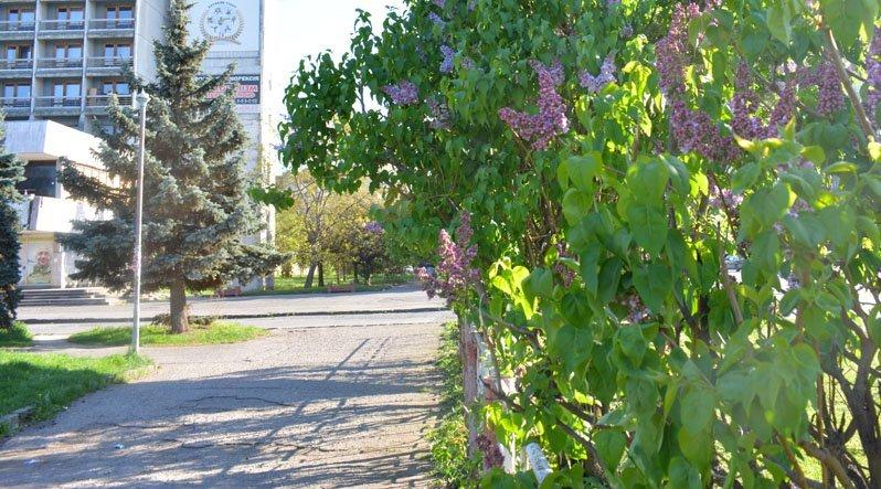 Весна продолжает радовать жителей Ужгорода, на этот раз зацвела сирень