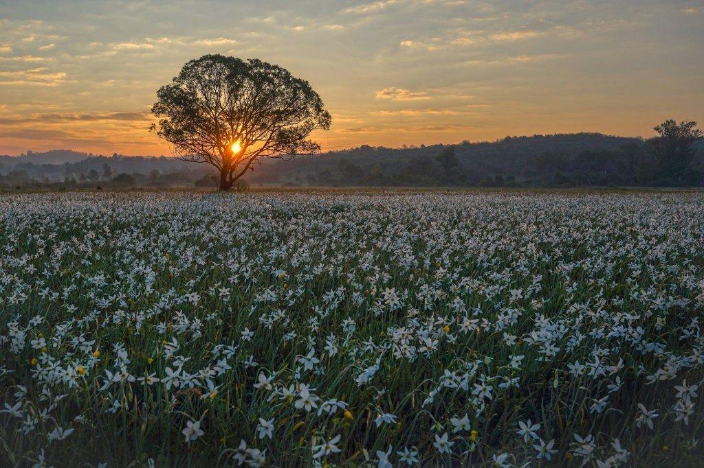 Фотографу удалось запечатлеть восход солнца в Долине