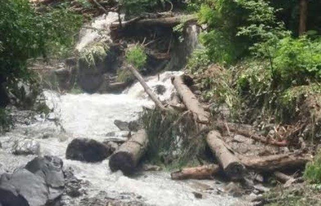 В реку сошли порубленные остатки из Карпатского биосферного заповедника