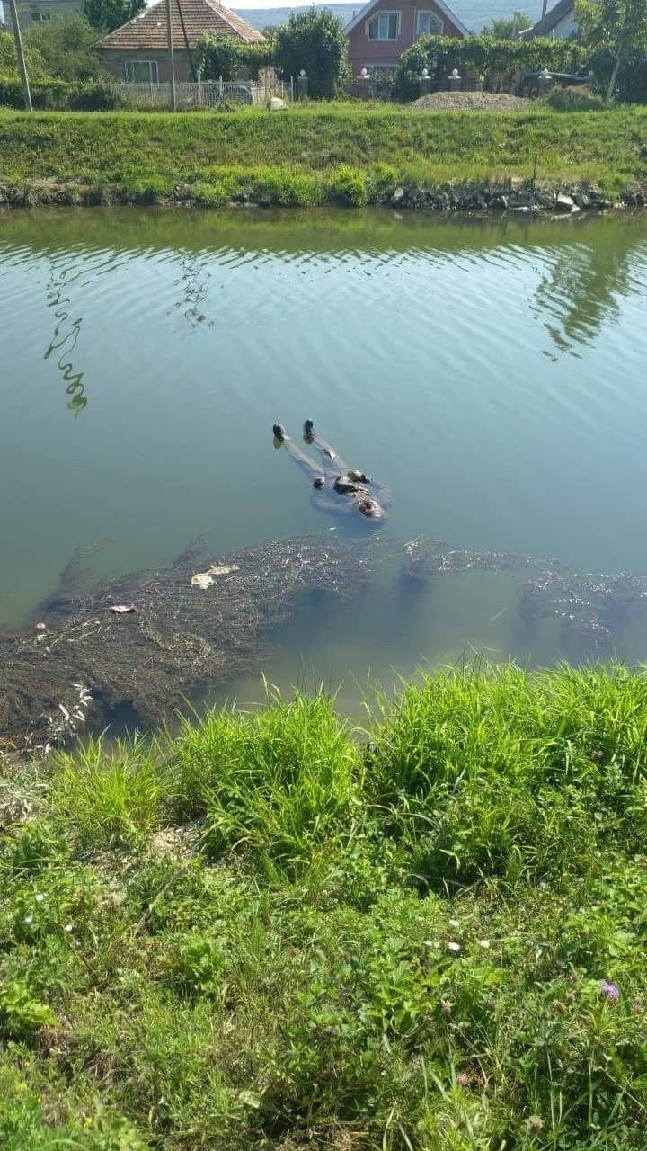 В Ужгороде на канале плавает человеческий труп