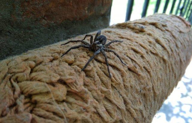 В Закарпатье во время ремонта человек нашел страшного паука большого размера
