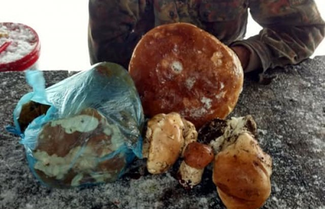 """Опытные грибники на Закарпатье умудряются найти """"улов"""" даже в снежное время"""