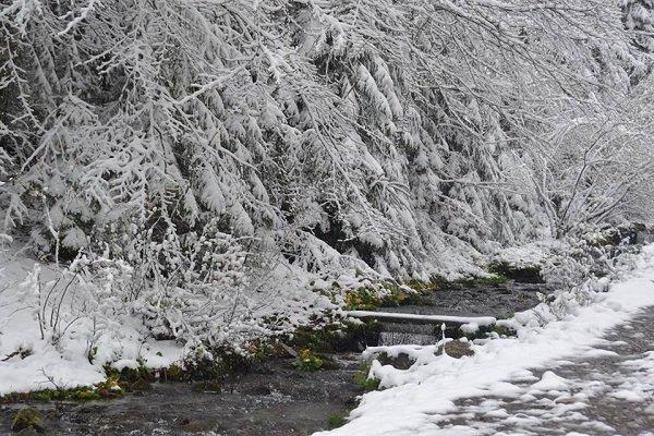 """В Нацпарке """"Синевир"""" на Закарпатье выпал снег"""