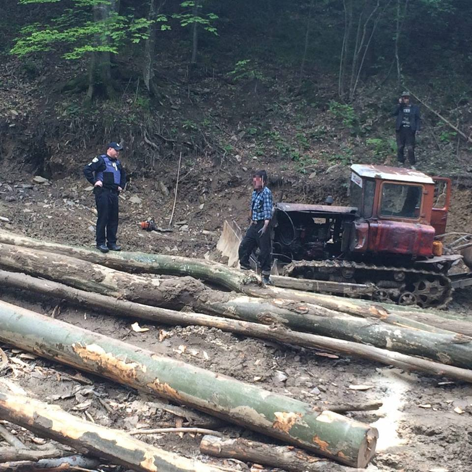 Мужчины не имели никаких разрешений на вырубку леса