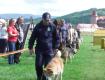 У Мукачеві відбувся парад собак, у якому взяли участь понад 70 учасників