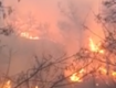 В Закарпатье бушующий огонь охватил огромный лес