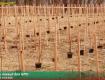 Ужгородщина: що насправді рубають лісівники в Дубках?!