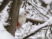 По Ужгороду летает необычная птица