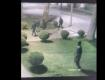 Обещают вознаграждение за информацию: В Мукачево среди ночи банда парней ограбила магазин