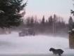 В Закарпатье бушует мощнейшая снежная буря