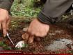 В Закарпатье сезон охоты на грибы не заканчивается