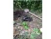 Соцсети оторопели от того, что произошло со щенятами в Ужгороде