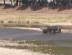 В Ужгороде грузовики уже ездят напрямую через остатки Ужа