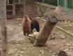 Чтобы нормально провести зиму, одному медведю нужно накопить около 50 кг жира
