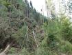 В Закарпатье бурелом уничтожил леса на 76 млн гривен