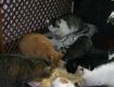 Настоящее кошачье царство на горнолыжном курорте в Закарпатье