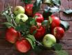 В Ужгород на дегустацию яблок съедутся спецы со всей страны