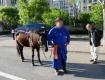 Пропажу коня сотрудники конезавода не заметили