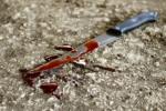 В Черкассах парень зарезал женщину-водителя такси и выбросил труп в лесополосу
