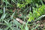 """Найден тубус от РПГ, из которого стреляли по """"Аква Сити"""" в Мукачево"""