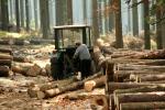 Турист показав вражаючі масштаби вирубки лісів Закарпаття