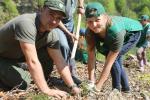 Лісівники Закарпаття щороку на 1 гектар висаджують 7 тисяч саджанців