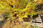 Прогноз погоди в Закарпатті на суботу, 19 жовтня