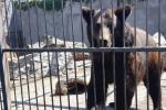 Два медведя, спасенных в Донецкой области, поселятся в горах Закарпатья