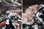 Трогательное фото собаки на могиле в Ужгороде вызвало спор в соцсетях