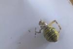 В Закарпатье человек просто у кровати увидел ядовитого паука