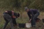 Учителя отказываются вакцинироваться: В Украине ученики школы вместо реальной учебы пошли копать картошку