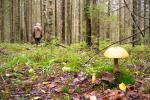 Закарпатье: Один пропавший любитель белых грибов нашелся сам, другого все еще ищут!