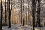 Ушла в лес и не вернулась: Жительницу Закарпатья нашли мертвой
