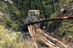 Бывший директор Ясинянского лесхоза, участник масштабных схем по вырубке леса, снова в деле