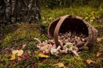 Ушли за грибами и не вернулись: В Закарпатье 3 день продолжаются поиски пропавшего дедушки
