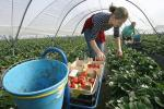 Стало известно что ожидает украинцев от заработок в Польше