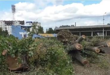 """Срубленные деревья: Что будут строить возле """"Авангарда"""" в Ужгороде?"""