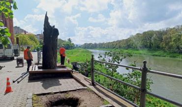 В Ужгороде на набережной возникло ЧП - упало огромное дерево