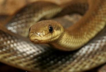 На Закарпатье: В больницах заявили что у них нет вакцины от укусов змей