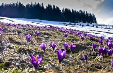 Закарпаття: Температура підвищується, а сніг заміниться дощем