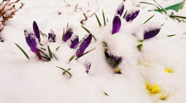 Якою буде сьогодні, 19 березня, погода на Закарпатті?