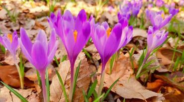 Якою буде сьогодні, 20 березня, погода на Закарпатті?