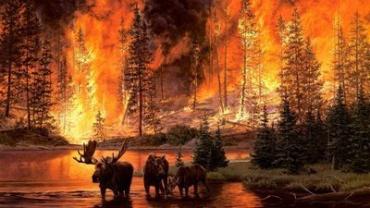 Закарпаття. Загорівся ліс поряд з Ужгородом