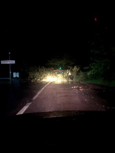 Огромное дерево перекрыло одну из главных улиц в Ужгороде